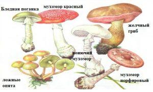 Как проявляется отравление грибами