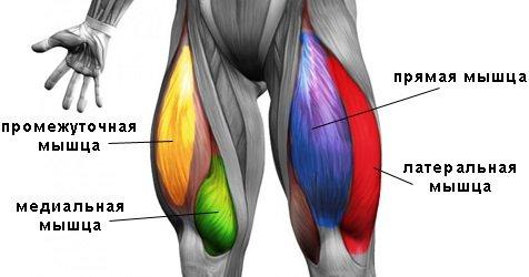 болит мышца бедра при поднятии ноги