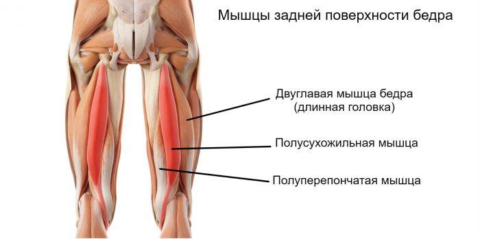 болит нога мышца голени и бедра