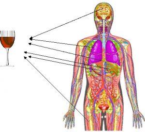 Последствия алкоголя на организм человека кратко