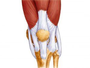 Изображение - Как лечить крестообразные связки коленного сустава Ligamentoz-300x229