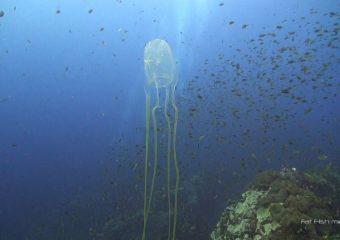 Как выглядят ожоги медуз фото